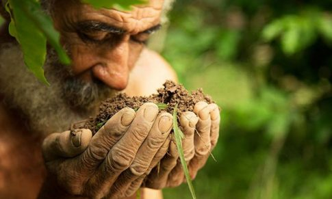 Conectando con la Inteligencia Natural de las Plantas