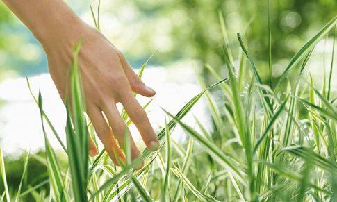 Cosmética Natural y Ecológica: Una forma Saludable de Cuidar tu Piel