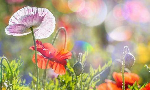 Cura Detox de Primavera con Aceites Esenciales