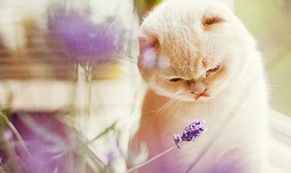 AromasQueCuran Premium - Aromaterapia para Mascotas