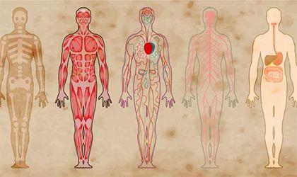 AromasQueCuran Premium - Aceites Esenciales y Sistemas del Cuerpo Humano