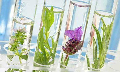 AromasQueCuran Premium - Artículos Salud y Belleza con Aceites Esenciales