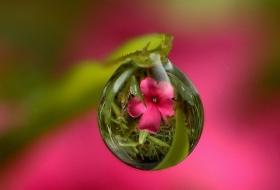 Hidrolatos y Aguas Florales: el Secreto Mejor Guardado de la Naturaleza
